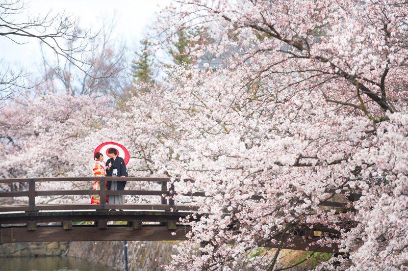 桜のロケーションフォト